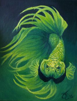 Green Envy Crowntail by greyviolett