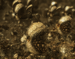 Mandelbulb3D - Critters? - with Parameter by matze2001
