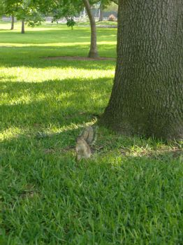 Squirrel by petewentzrox