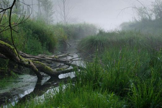 St. Odile's Marshes VIII by Anntylus