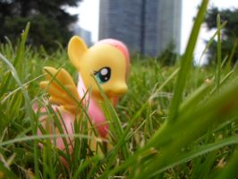 Fluttershy at Chicago! by MidnightRarity