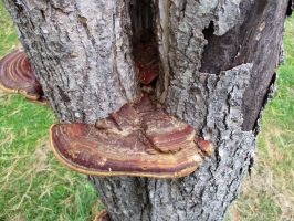 Fungus Looks Like A Shoe by seaglasshunter