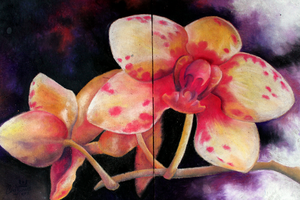 Chalk Art Spring Orchid by charfade