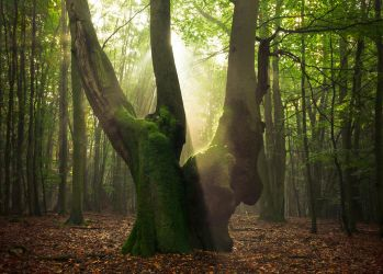 Giant in the light by aw-landscapes