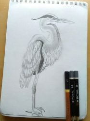 Great Blue Heron by Crystella4