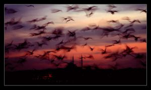 istanbul by truth-truth