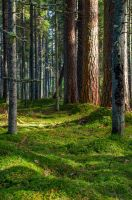 Forest Portrait by sulevlange