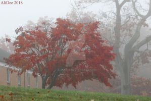 Red Tree in the Fog by AliDee33