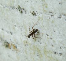 Ant on Bark by kbcollins