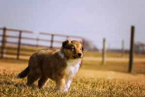 Our Little Duncan by JeffreyDobbs