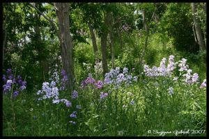 wildflowers by Nariane