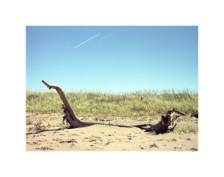 Driftwood from 1:46am - 2:20am by apinrise