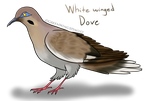 White Winged Dove (LOTGW style) by GreenWingSpino32