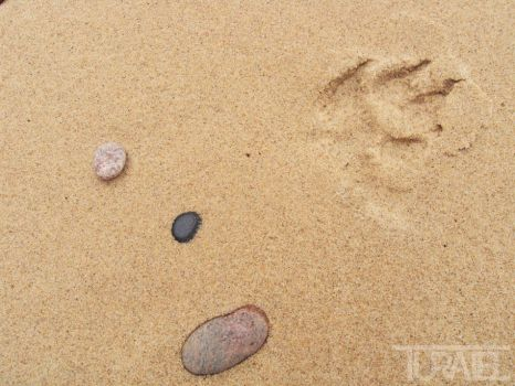 Paw Print in the Sand by Turaiel