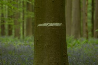 Blue Forest Hallerbos 005 by ISOStock