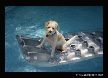 Max on a Float by ShareLife