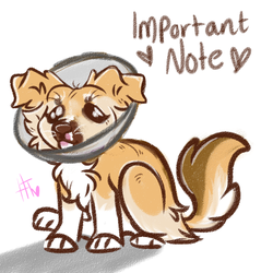 Letting you guys know! by HannahTailz
