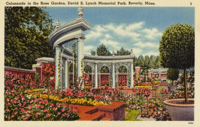 Vintage New England - Rose Garden, Lynch Mem. Park by Yesterdays-Paper