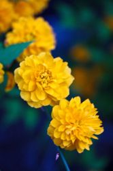 yellow bloom by Jlamanna-photography
