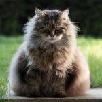 Queen Fluff by FurLined