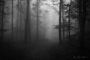 Lost in the desolate forest... by ArkanumTenebrae