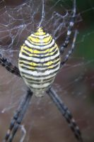 Ugly Spider Close Up by TheFairBrigit