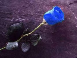 blue rose by huncyrus