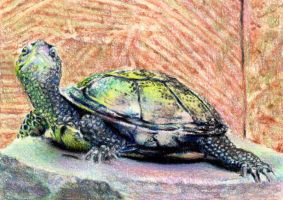 10.19 Basking Turtle by theperian