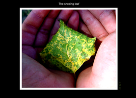 The Sheding Leaf by tigertial8888