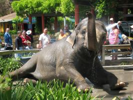 Clean and Happy Elephant by umi