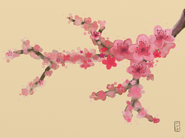 Cherry Blossoms by hannxm