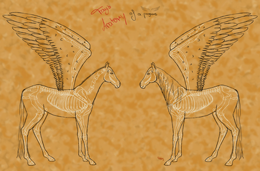 Pegasus Anatomy skeleton with outlines by Death-of-Fantasy