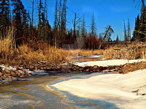 Spring Thaw by jaimiemoon