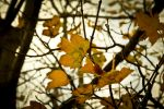 Fall Impressions by alexkaessner