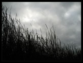 Autumn cattails - Oct 2007 by pearwood