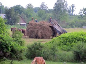 Amish Kids Haying by Lectrichead