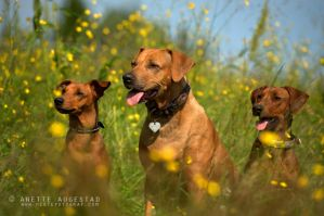 The Ultimate Trio by Hestefotograf
