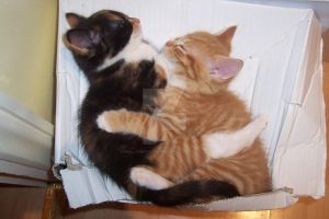 Kittens Hugging by MollyPhotography-ox