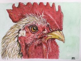 Rooster (haan). by marmeline
