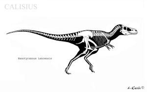 nanotyrannus skeletal.rec by Calisius