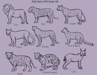 larger cat body types by Tianithen