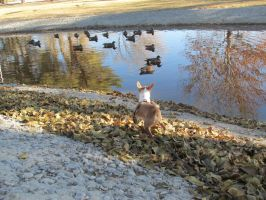 My Baby boy watching Ducks by PunkyDoodle96