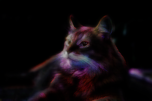Feline of Electric Colour by Kant-Predict