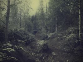 forest 20 by Amalus
