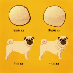 HOW OLD IS YOUR PUG? by ManuelKilger