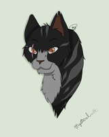 Mysticalpelt of DarkClan by drawingwolf17