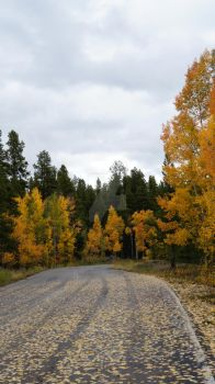 Fall Road by Lady-J-Photography