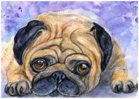 Pug by AlbinaDiamond