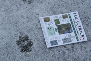Wolf Tracks by ringette-and-riding