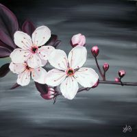 cherry blossoms by jennymacattack